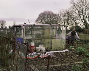allotment-1